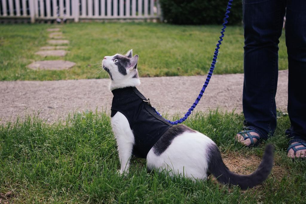 Нужно ли гулять с кошкой на поводке
