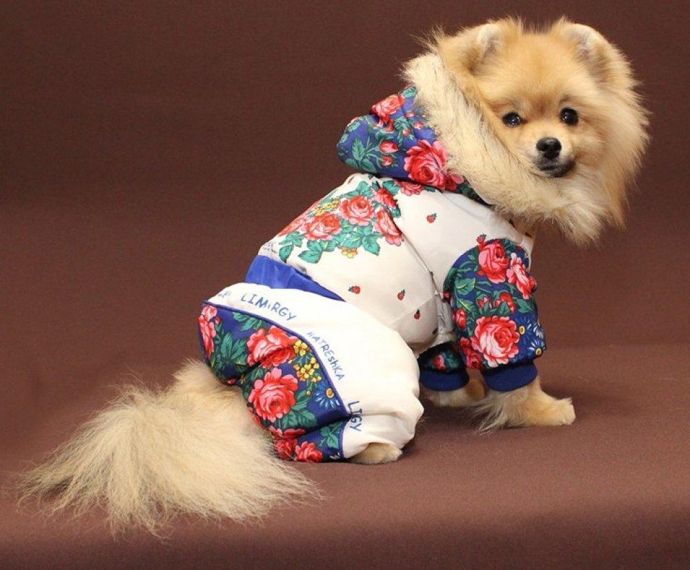 Как одеть собаку, с фото